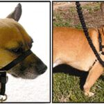 Best Way To Teach A Dog To Walk On A Leash and Dog Training Techniques Digging