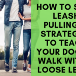 Best Way To Teach A Dog To Walk On A Leash / Dog Training Techniques Digging