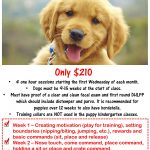 Cheap Dog Training Classes Near Me / When To Train A Dog To Sit