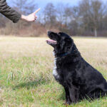 Dog Tracking Training / Training A Dog To Sit Stay And Come