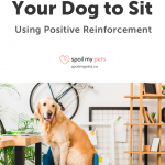 Dog Training Techniques Positive Reinforcement / Dog Grooming Training Programs