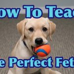Dog Training Techniques Positive Reinforcement / Train A Dog To Fetch A Ball