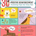 Dog Training Techniques Positive Reinforcement / Training A Dog To Stay In Yard