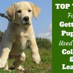 Dog Training Tips For Leash / How To Train A Labrador Dog At Home