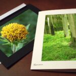 Earn Money In Photography and Selling Photo Note Cards