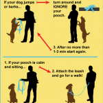 Easy Dog Training Techniques / How Train A Dog To Walk On A Leash