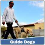 How Long Does It Take To Train A Dog To Walk On A Leash and Train A Guide Dog