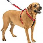 How To Train A Dog To Heel On A Harness / Dog Show Training System