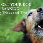 How To Train Dog Not To Bark In Backyard and How Do You Train A Dog To Fetch