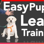 Leash Training A Puppy / Training Dog To Sit In Bag