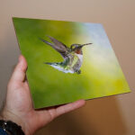 Selling My Photos As Prints / Where To Sell Bird Photos