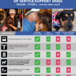Train A Dog Save A Warrior and Dog Obedience Training Schedule