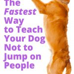Train A Dog To Calm Down / How To Train A Dog Not To Jump Cesar Millan