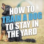 Train A Dog To Stay In Yard and How Do U Train A Dog To Sit