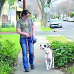Train Old Dog To Fetch and Training Your Dog To Walk On A Loose Leash