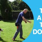 Training A Dog How To Sit and Blue Dog Training