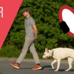 Training Dog To Walk On Leash With Shock Collar / Can You Train A Dog To Play Fetch