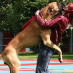 Training Your Dog Not To Jump Aspca and Dog Training Center Near Me