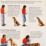 Tricks You Can Teach Your Dog / How Do You Train A Dog To Sit And Stay