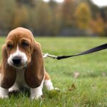 When To Train A Dog To Walk On A Leash and Dog Training Program Names